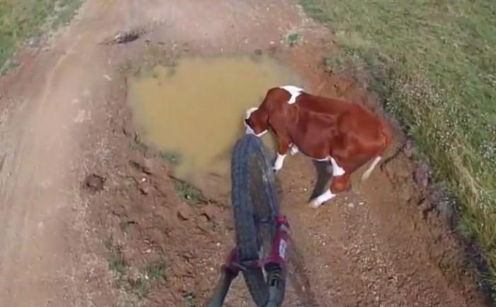 прыжок через корову