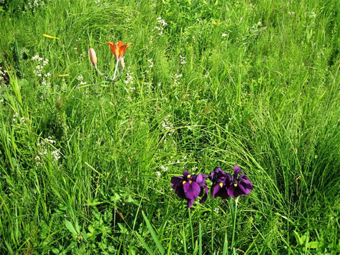 цветы у дороги