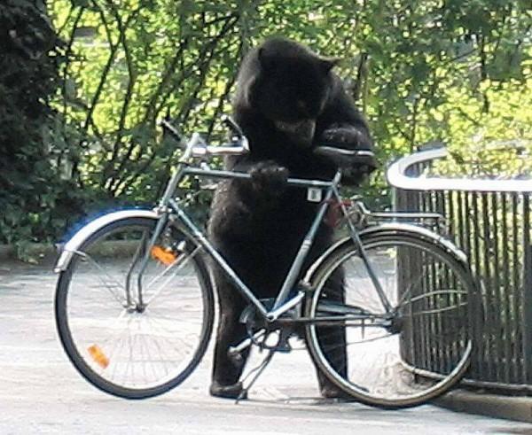 Медведь и велосипед