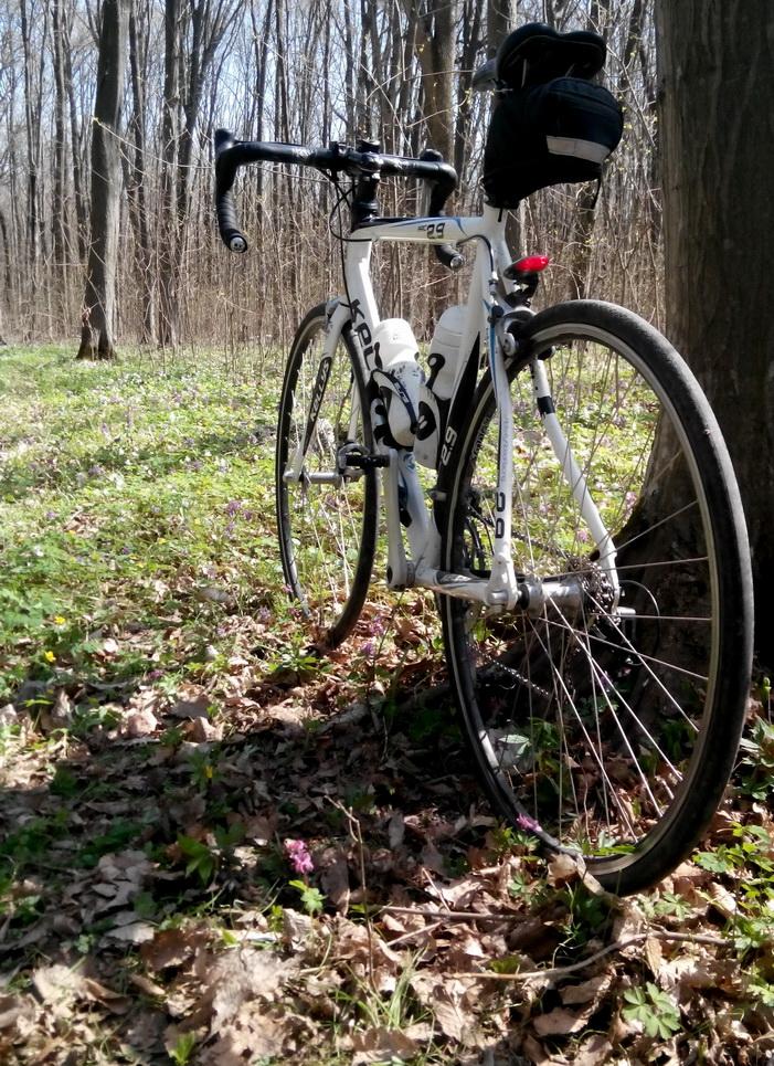 велосипед в лесу