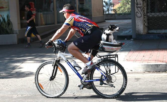 собака в корзине велосипеда