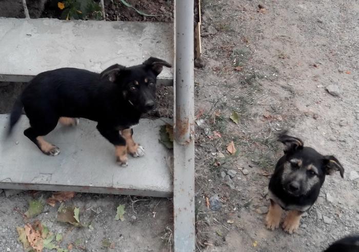 щенки и лестница