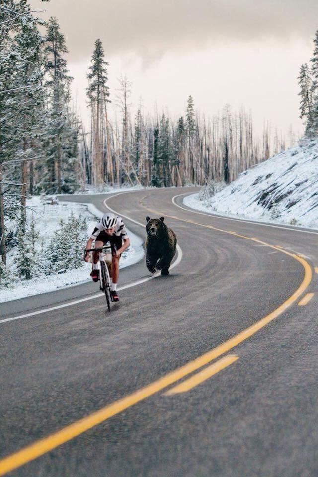 медведь и велосипедист