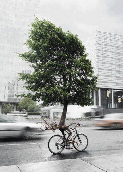 дерево на велосипеде