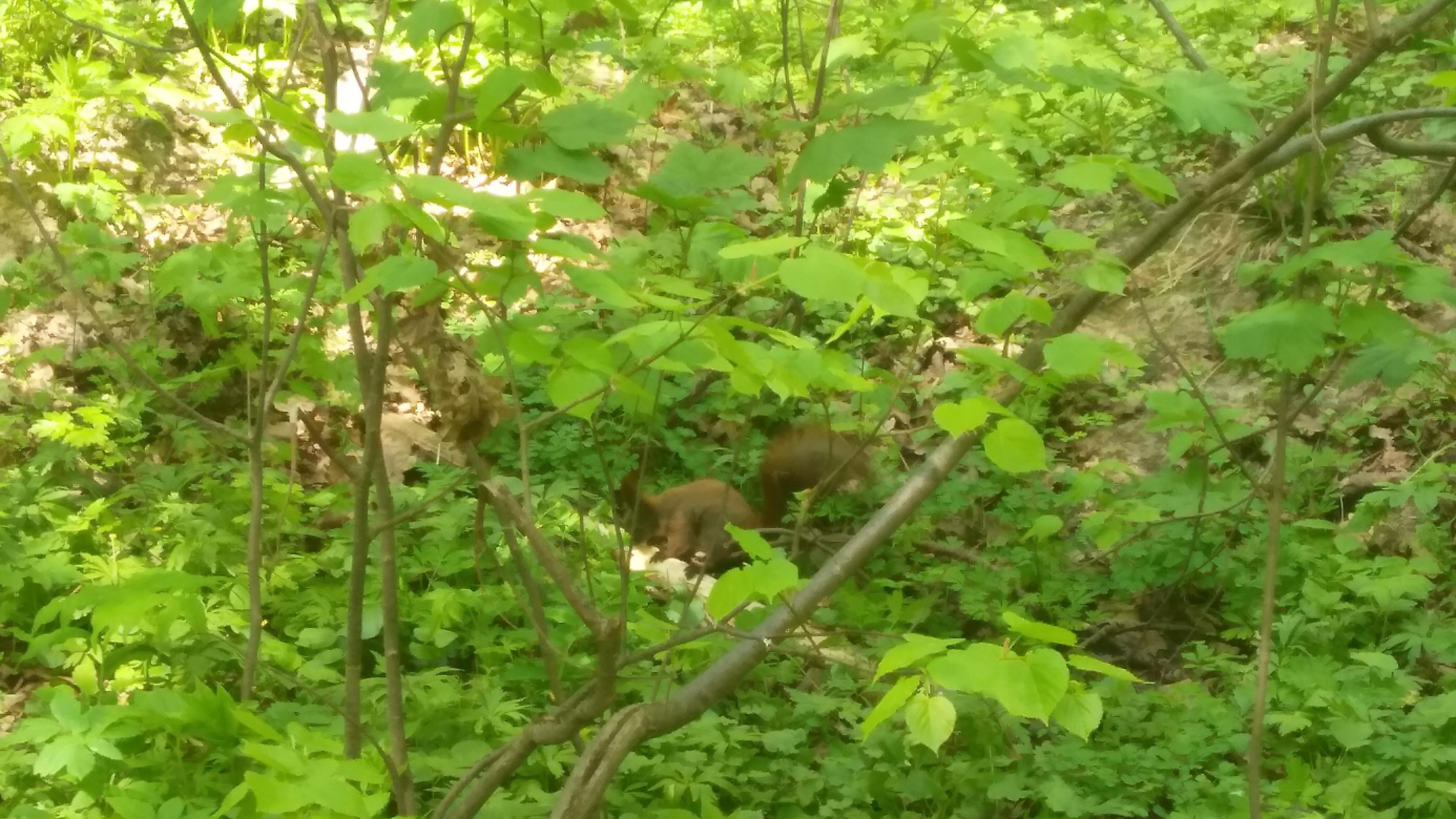 Белочка в лесопарке