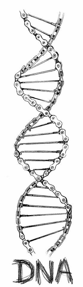 Велосипедная ДНК